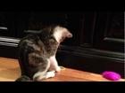 Bogart - Adoptable from Bonner Animal Rescue